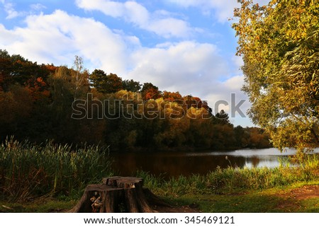 Autumn forest by the rive