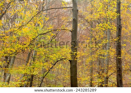 Autumn forest colours