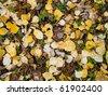 Autumn forest floor - stock photo
