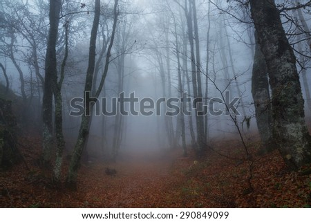 Autumn forest in Crimea