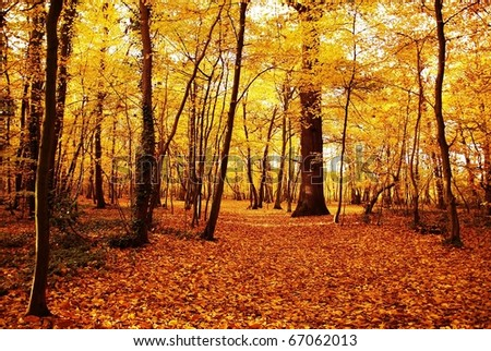 Autumn forest in europe - stock photo