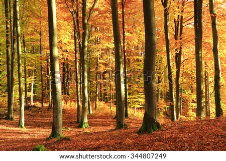 Autumn forest in north Poland.Pomerania province/ Autumn Forest - stock photo