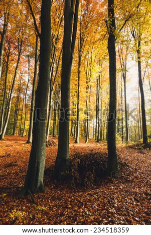 Autumn forest in north Poland.Vintage style/Autumn forest vintage - stock photo