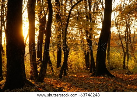 Autumn forest in the evening - stock photo