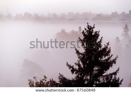 Autumn forest in the fog, early morning.