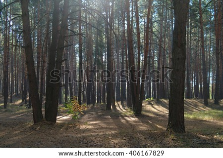 Autumn forest in the morning mist  - stock photo