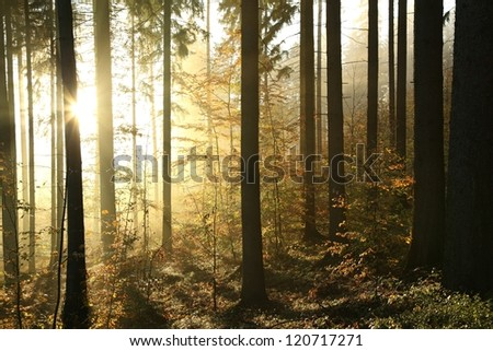 Autumn forest in the mountains of the southern Polish on a foggy morning.