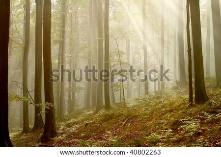 Autumn forest in the mountains with the fog formed from the low-hung clouds and sun rays between the beech trees. - stock photo