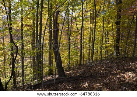 Autumn forest in West Virginia