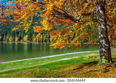 Autumn forest landscape and famous volcanic lake in Transylvania,St Anna Lake,Romania,Europe - stock photo