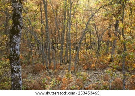 Autumn forest landscape in Spain. Warm tone. Horizontal - stock photo