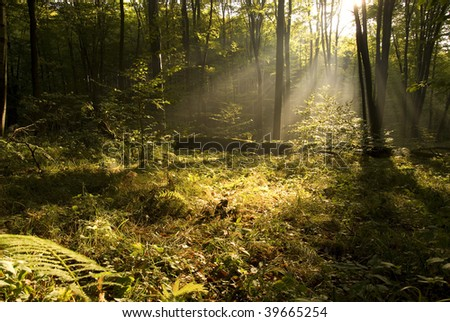 Autumn forest landscape in the morning - stock photo
