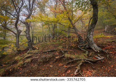 Autumn forest landscape with fallen leaves - stock photo