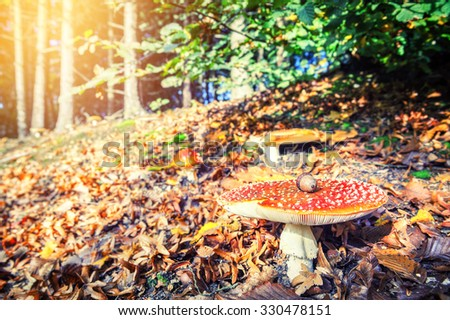 Autumn forest landscape with red cap mushroom - stock photo