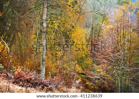 Autumn forest landscape with the frozen plants and the hoar-frost - stock photo