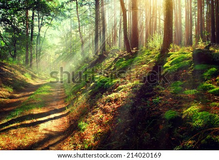 Autumn Forest. Magical Park. Beautiful Scene Misty Old Forest with Sun Rays, Shadows and Fog  - stock photo