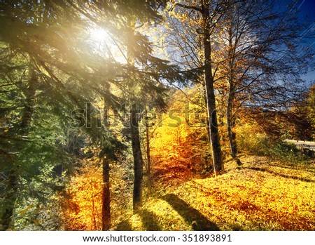 Autumn Forest on a bright sunny day - stock photo