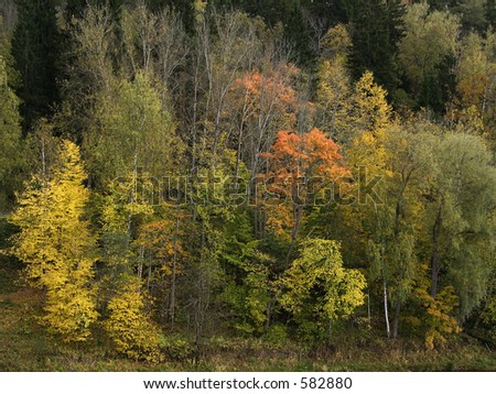 Autumn forest on the hill in the evening - stock photo