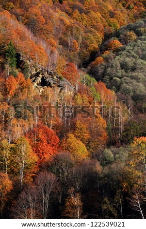 Autumn forest on the hill side - stock photo