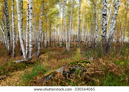 Autumn forest on the lake Arakul. South Ural