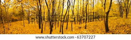 autumn forest panorama - stock photo