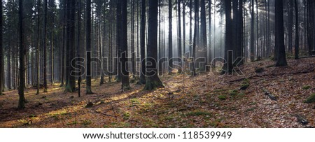 autumn forest panorama with sunbeams between trees - stock photo
