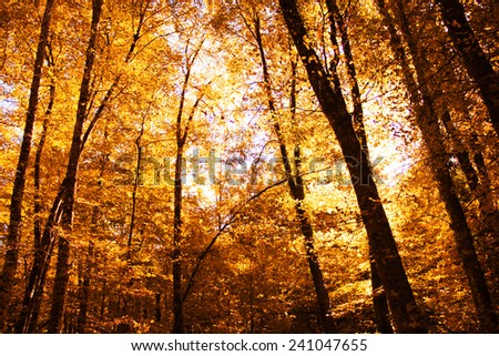 Autumn Forest. Park Road. Landscape with the autumn forest. - stock photo