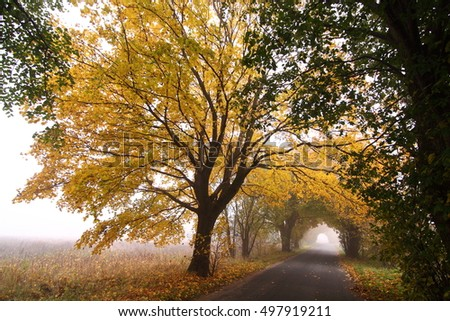 Autumn forest path/ The road under the arch of autumn trees in the fog