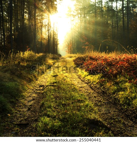 Autumn forest road in north Poland.Pomerania province/Rays of light - stock photo
