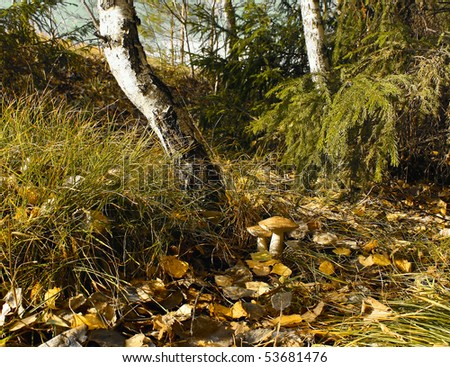 Autumn forest's view - stock photo