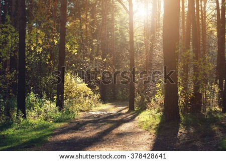 Autumn forest scenery with rays of warm light illumining the golden foliage and a footpath leading into the scene