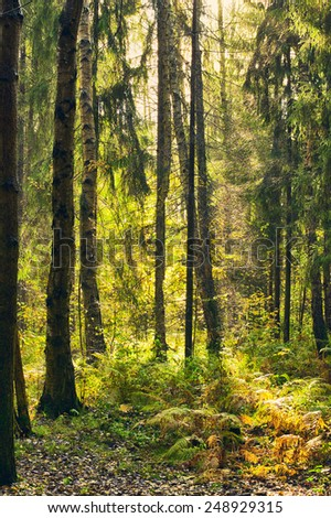 autumn forest thicket after rain with sunbeams - stock photo