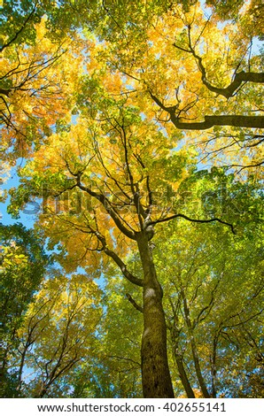 autumn forest trees. - stock photo