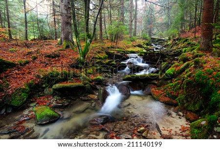 Autumn forest.waterscape - stock photo