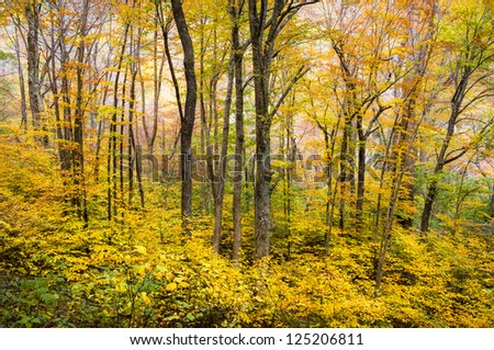 Autumn Forest Western NC Fall Foliage Trees Scenic Nature Photography with vibrant maple, oak, and ash - stock photo