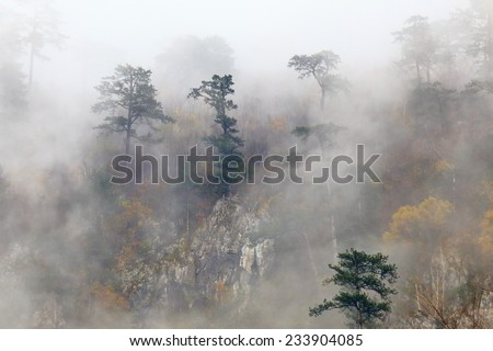 Autumn forest with distant trees emerging from under the morning mist - stock photo