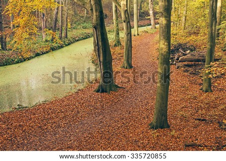 Autumn forest with duckwood covered canal. High angle view. - stock photo