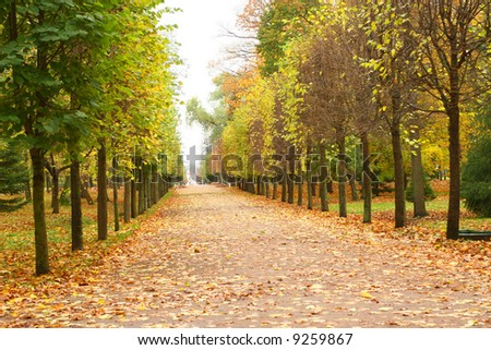 Autumn forest with fallen leaves - stock photo