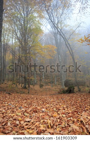 Autumn forest with fog among trees and a lot of fallen leaves