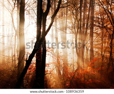 Autumn forest with fog and sunshine,beautiful nature - stock photo