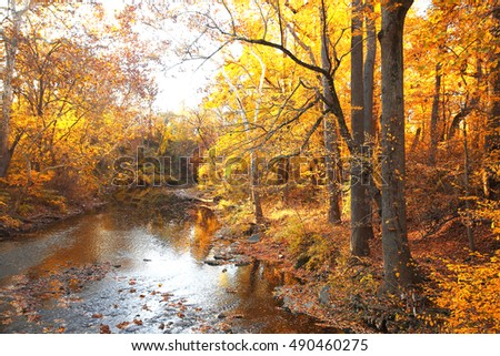 Autumn forest with river. Park in fall