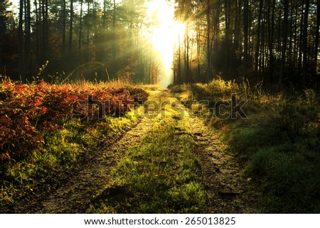Autumn forest with Road and Sunbeams in north Poland.Pomerania province/ Autumn Forest Landscape - stock photo
