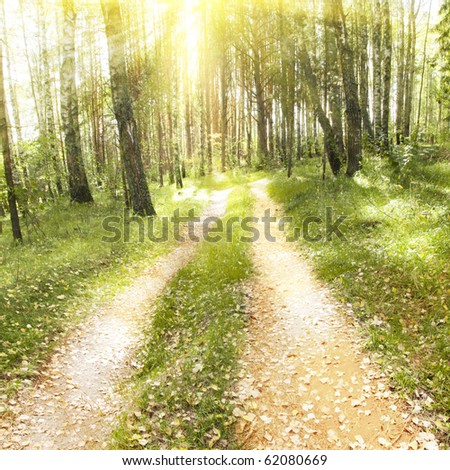 Autumn forest with road and sunlight. - stock photo