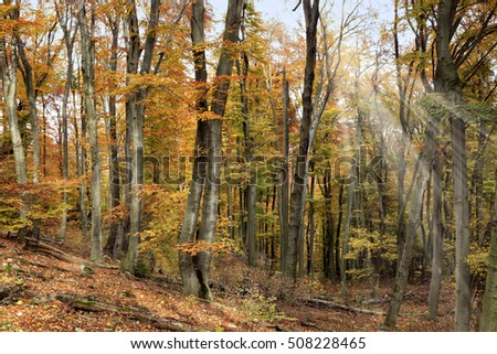 Autumn forest with sunlight