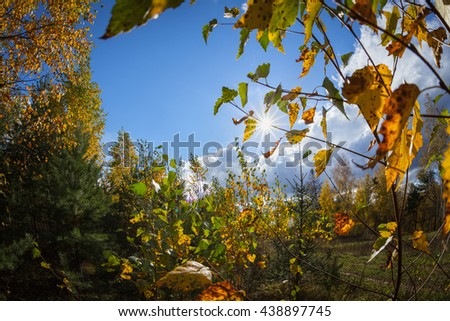 Autumn forest with sunlight and blue sky - stock photo