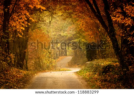 Autumn forest with way - stock photo