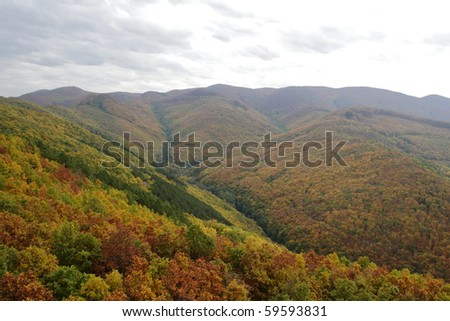 Autumn forrest in the mountains - stock photo