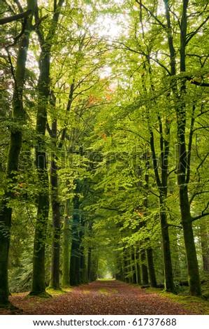 autumn forrest path - stock photo