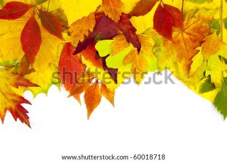Autumn frame / beautiful real leaves / isolated on white