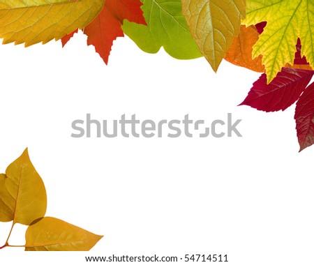 Autumn Frame â?? Mixed yellow-red-green leaf (XXL) - stock photo